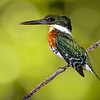 Maker:  Dale Lindenberg<br /> Title:  Green King Fisher<br /> Category:  Pictorial<br /> Score:  12