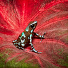 Maker:  Dale Lindenberg<br /> Title:  Frog #3<br /> Category:  Macro/Close Up<br /> Score:  13