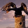Maker:  Wayne Tabor<br /> Title:  Dragon Bird<br /> Category:  Wildlife<br /> Score:  11