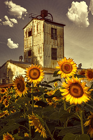 Maker:  Wayne Tabor<br /> Title:  Sunflower Mill<br /> Category:  Altered Reality<br /> Score:  11