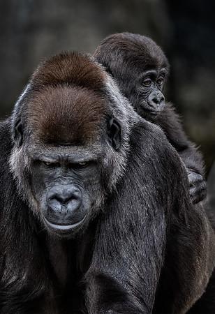 Maker:  Dale Lindenberg<br /> Title:  Ape & Baby<br /> Category:  Pictorial<br /> Score:  14