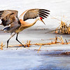 Maker:  Dale Lindenberg<br /> Title:  Sand Hill Crane<br /> Category:  Wildlife<br /> Score:  12