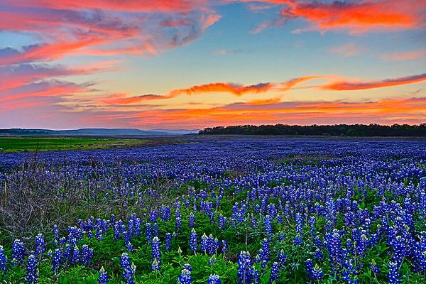 Maker:  Mike Smith<br /> Title:  Bluebonnet & Sunset<br /> Category:  Landscape/Travel<br /> Score:  12