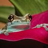 Maker:  Dale Lindenberg<br /> Title:  Frog #2<br /> Category:  Macro/Close Up<br /> Score:  15