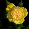 Maker:  Roger Lockridge<br /> Title:  Dew on Rose<br /> Category:  Pictorial<br /> Score:  13