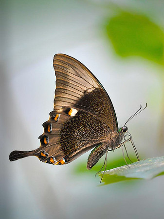 Maker:  Dwayne Anders<br /> Title:  Butterfly 1<br /> Category:  Macro/Close Up<br /> Score:  13