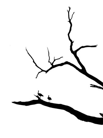 Maker:  Dwayne Anders<br /> Title:  Black Ducks<br /> Category:  Black & White<br /> Score:  11