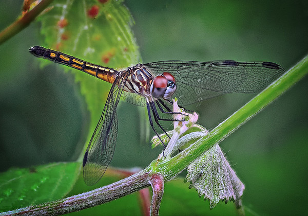 Maker:  Wayne Tabor<br /> Title:  Dragonfly<br /> Category:  Macro/Close Up<br /> Score:  14