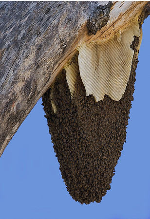 Maker:  Ronald Austin<br /> Title:  The Hive<br /> Category:  Wildlife<br /> Score:  12