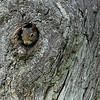 Maker:  Ronald Austin<br /> Title:   Pick-a-Boo<br /> Category:  Wildlife<br /> Score:  11