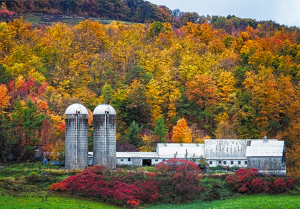 Maker:  Wayne Tabor<br /> Title:  Autumn Farm<br /> Category:  Pictorial<br /> Score:  13