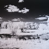Maker:  Dale Robertson<br /> Title:  Tired Old Tree<br /> Category:  Black & White<br /> Score:  11