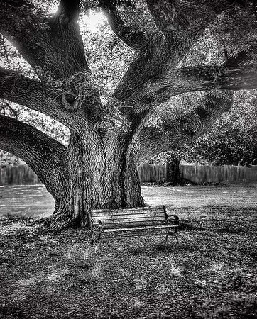 Maker:  Dwayne Anders<br /> Title:  Old Oak<br /> Category:  Black & White<br /> Score:  12