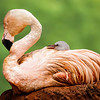 Maker:  Dale Lindenberg<br /> Title:  Flamingo with Chick<br /> Category:  Pictorial<br /> Score:  14
