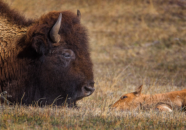 Maker:  Wayne Tabor<br /> Title:  Mutual Admiration<br /> Category:  Wildlife<br /> Score:  13