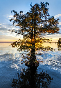 Maker:  Mike Smith Title:  Caddo Lake Sunset 2 Category:  Landscape/Travel Score:  11