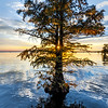 Maker:  Mike Smith<br /> Title:  Caddo Lake Sunset 2<br /> Category:  Landscape/Travel<br /> Score:  11