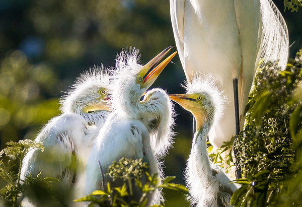 Maker:  Larry Phillips<br /> Title:  Feed me Mama<br /> Category:  Wildlife<br /> Score:  13