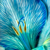 Maker:  Roger Hinton<br /> Title:  Blue Veins<br /> Category:  Macro/Close Up<br /> Score:  12