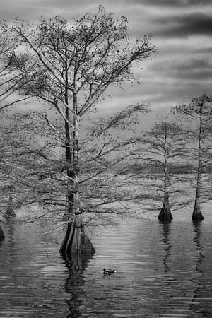 Maker:  Ted Miot<br /> Title:  Storm Rising<br /> Category:  Black & White<br /> Score:  12