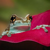 Maker:  Dale Lindenberg<br /> Title:  Peek a Boo<br /> Category:  Macro/Close Up<br /> Score:  14