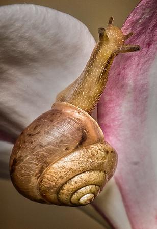 Maker:   Dale Lindenberg<br /> Title:  Snail<br /> Category:  Macro/Close Up<br /> Score:  14