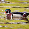 Maker:  Wayne Tabor<br /> Title:  Wood Duck Drake<br /> Category:  Wildlife<br /> Score:  14
