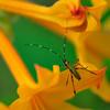 Green Bug - Open Color<br /> Score 12<br /> Dwayne Anders  , 2008