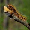 Caterpillar - Nature<br /> Score 13<br /> Dwayne Anders  , 2008