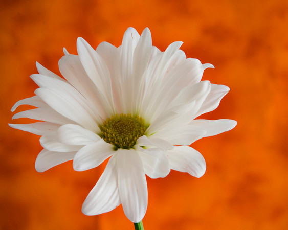 I Wonder<br /> Category: Open Color<br /> Photographer: Rhonda Tolar<br /> Score: 13  , 2008