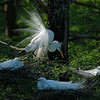 Egrets At Sunrise<br /> Nature - <br /> Score 12<br /> Reese Hood  , 2008