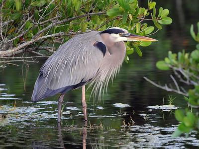 Merritt Island, Ole Bird - Nature Score 12 Dwayne Anders  , 2008