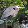 Merritt Island, Ole Bird - Nature<br /> Score 12<br /> Dwayne Anders  , 2008