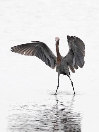 Fishing, Merritt Island - Nature<br /> Score 11<br /> Dwayne Anders  , 2008