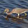 Lunch, Merritt Island - Nature<br /> Score 15<br /> Dwayne Anders  , 2008