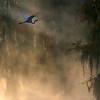 """""""Lake Bisteneau Scene"""" <br /> By Eric Sorensen <br /> Catagory: Nature <br /> Score: 13  , 2008"""