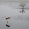 Walking - Nature<br /> Score 15<br /> Dwayne Anders  , 2008