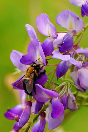 Bee<br /> Category: Open Color<br /> Photographer: Maureen Verschelde<br /> Score: 12  , 2008