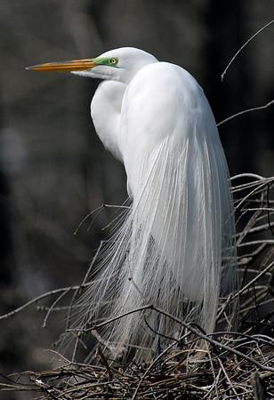 Great Heron #6<br /> Nature - Score 11<br /> Reese Hood  , 2008