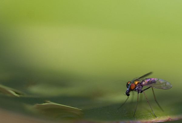 """""""The Fly""""<br /> Category: Nature<br /> Score: 12<br /> Maker: Glenda Collums  , 2008"""