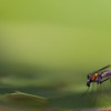 """The Fly""<br /> Category: Nature<br /> Score: 12<br /> Maker: Glenda Collums  , 2008"
