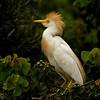 Jefferson Island, Egret - Nature<br /> Score 14<br /> Dwayne Anders  , 2008