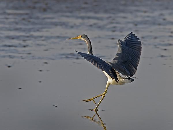 Merritt Island, Landing - Nature<br /> Score 11<br /> Dwayne Anders  , 2008
