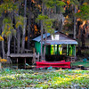 Caddo Lake Canoes<br /> Open Color<br /> Score: 12<br /> Loleta Holley  , 2008