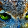 """Owl Eyes"" <br /> By Eric Sorensen <br /> Catagory: Non-traditional <br /> Score: 12  , 2008"