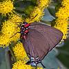 Maker:  Dale Lindenberg<br /> Title:  Butterfly<br /> Category:  Pictorial<br /> Score:  13