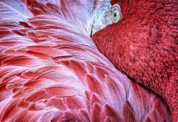Maker:  Dale Lindenberg<br /> Title:  Flamingo<br /> Category:  Pictorial<br /> Score:  13