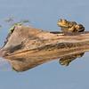 Maker:  Dale Lindenberg<br /> Title:  Frog on Log<br /> Category:  Wildlife<br /> Score:  12