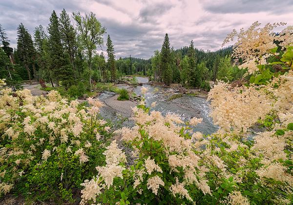 Maker:  Wayne Tabor<br /> Title:  Flowers Along the American River<br /> Category:  Landscape/Travel<br /> Score:  11