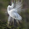 Maker:  Dwayne Anders<br /> Title:  Courting<br /> Category:  Wildlife<br /> Score:  13.5
